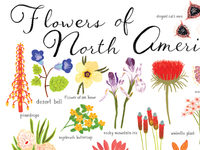 Flowers Of North America 400x300