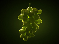 Grape_teaser