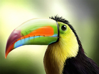 Tucano Photorealistic Digital Painting
