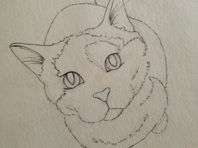Bibble the cat sketch