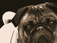 Pug Vector Illustration