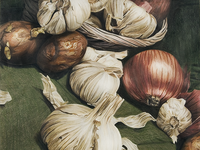 Color Pencil Garlic