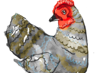 The Illustrative Chicken