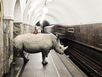 Rhino in the subway