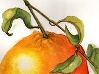 Tangerine watercolour
