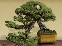 """つい、盆栽"" (Twit Bonsai) Illustration"
