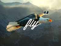 Fly_dribbble_teaser