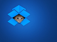 Ceiling Cat is Watching You Dropbox