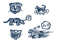 drawings of tiger