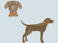 Pet Illustrations-Style development