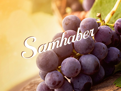 Samhaber_grapes_dribbble