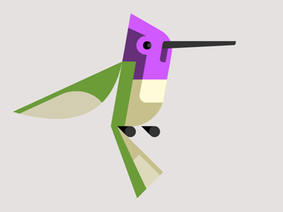 Hummingbird_dribbble