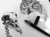 Sketchbook - study of an owl