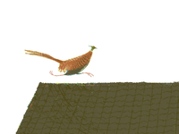 Pheasant On The Roof