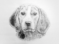 Dog - pencil drawing