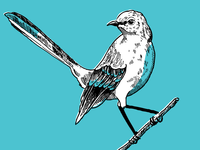 Patrick Newman Bird Illustration