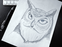 Warmup Sketch: Bearded Owl