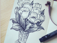 Sketch of tulips