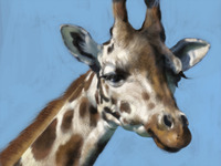 Giraffe Study progress snapshot. Moving toward a finish.