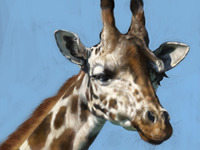 Giraffe Study for Schoolism