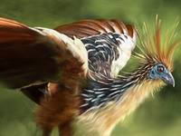"Hoatzin Study for ""Schoolism"" course."