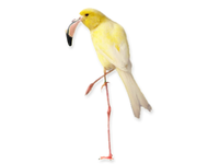 A Canary Bird Disguised As A Flamingo