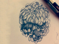 Chrysanthemum Skull Sketch