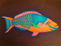Rainbow Fish Illustration