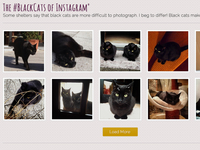 Black cats of instagram