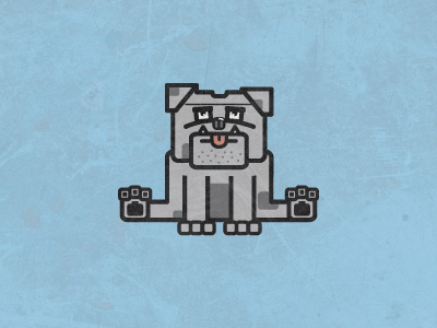 Square-bulldog