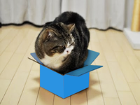 Maru loves Dropbox!