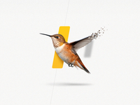 Humming bird for Navitrio.com