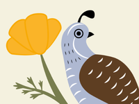 California Quail and Poppy