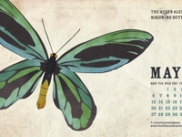 May 2013 Wallpaper - The Queen Alexandra's Birdwing Butterfly