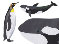 King Penguin & Orca