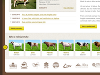 Cattle web site