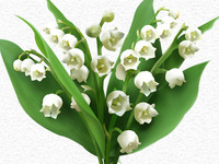 Flowerly Muguet Edition