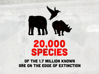 'The Next Mass Extinction' Infographic