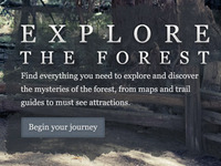 Explore the Forest