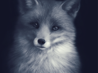 Fox Digital Painting