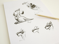 Kangaroo Sketches