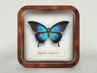 Pinned Butterfly iOS Icon