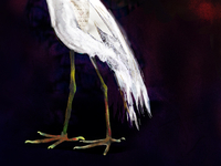 Hungry Egret Legs1
